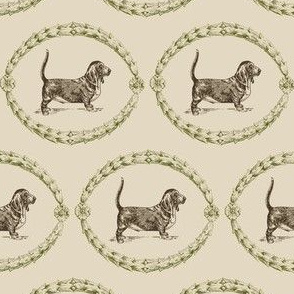 Basset-chocolate evergreen
