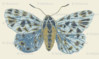Tiger Moth Pearlwood