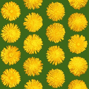 dandelions on leaf green