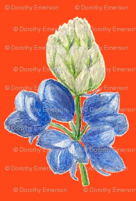Blue_Lupine_Orange_Back