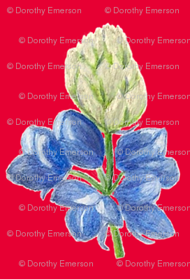 Blue_Lupine_Red_Back