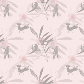 Pink_Hakea_small_scale