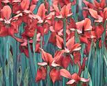 Rrrrr30_norfolk_botanic_gardens_poster_edges_salmon___turq2_150dpi_thumb