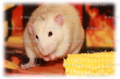 Fancy Rat and Corn