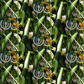 Innocent flowers