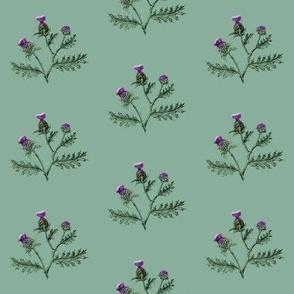 Thistle #7 Sage Green
