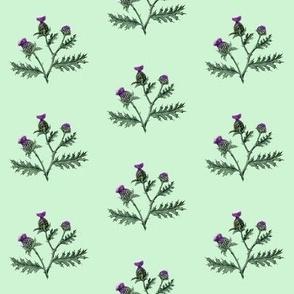 Thistle #8 Mint