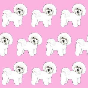 Bichon Frise dog Pink Madness