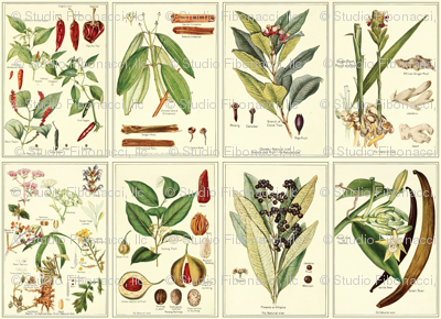 Botanical Spices - 12in