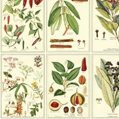 Rbotanical_prints-small_shop_thumb