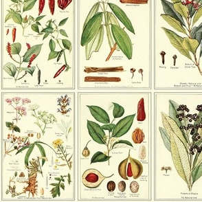 Botanical Spices (small)