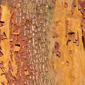 Arbutus or Madrona Bark