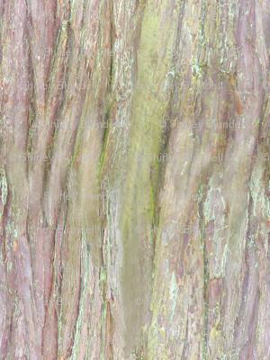 Bark 3