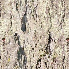 Bark 4_