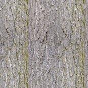 Rscarlet_oak_bark__shop_thumb
