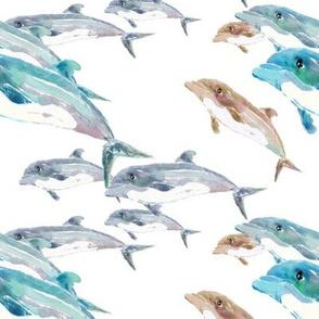 Blue Dolphins Swim
