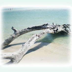 driftwood on aqua