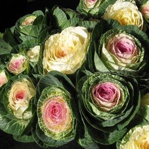kale_flowers