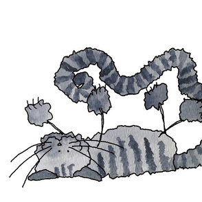 Fluffy Grey Tabby Cat