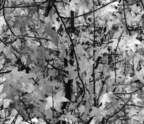 The Wild Wood ~ Black and White fabric by peacoquettedesigns on Spoonflower - custom fabric