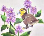 Rwater_hyacinths_mallard_duckling_ed_thumb