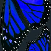 Giant Blue Monarch Butterfly Wings