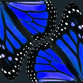 Blue Monarch Butterfly Wings