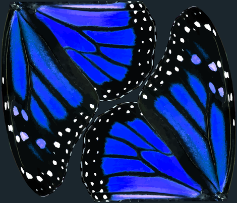 Butterfly wings have a hidden structure that rivals vantablack in its darkness RButterfly9_Vector1a_blue1_shop_preview