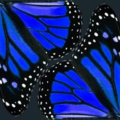 Rbutterfly9_vector1a_blue1_shop_thumb