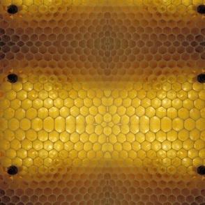 DSCN7060_Where is the honey?
