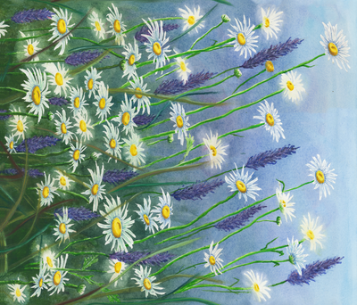 Field Daisies & Lavender