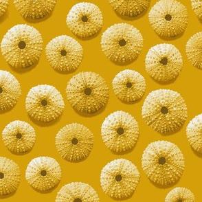golden sea urchin shells