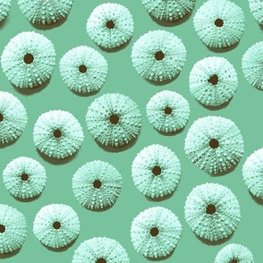 sea urchin shells - green