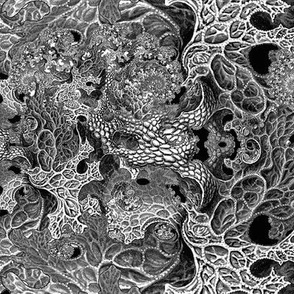 Haeckel Remix