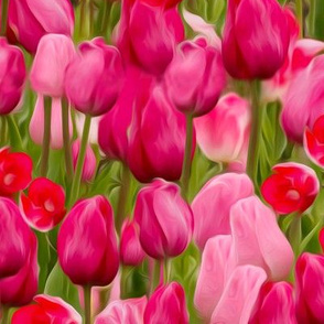 Tulip Serenade