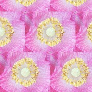 pink_wildflower_closeup