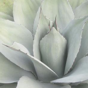 large_cactus