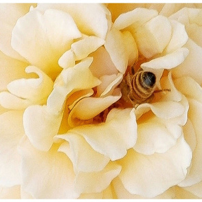 bee_in_rose