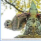 Owl_three_shop_thumb
