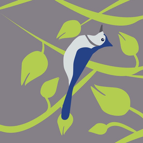 Blue Jay on Vine
