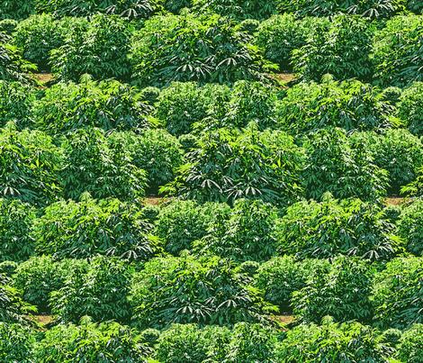 My Favorite 420 Garden fabric by camomoto on Spoonflower - custom fabric