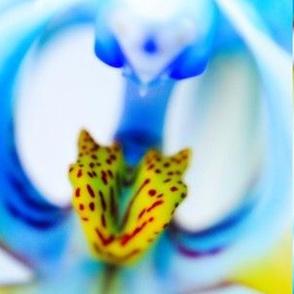 CRW_5919_orchid_ms