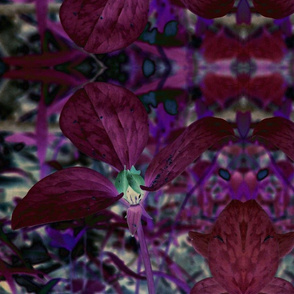 trillium changed colors