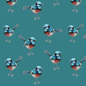 Wrens on Teal