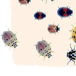Beetle Line Dance
