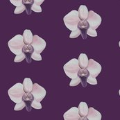 Rrlilac_orchid_shop_thumb
