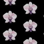 Rrlilac_orchid_black_shop_thumb