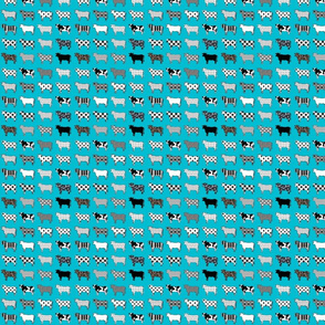 turquoise cows