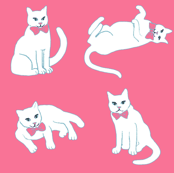 White cat on pink