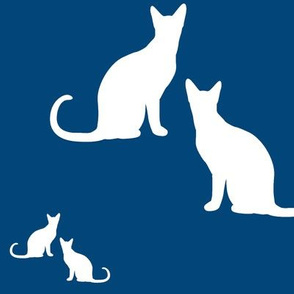 Cats white on blue
